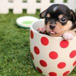 犬に必要なのは土壌由来の乳酸菌!ワンちゃんが喜ぶおやつ「ワンクッキー」で健康ケア