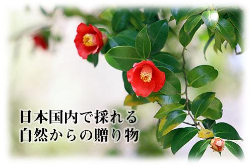 日本国内で採れる素材を使用
