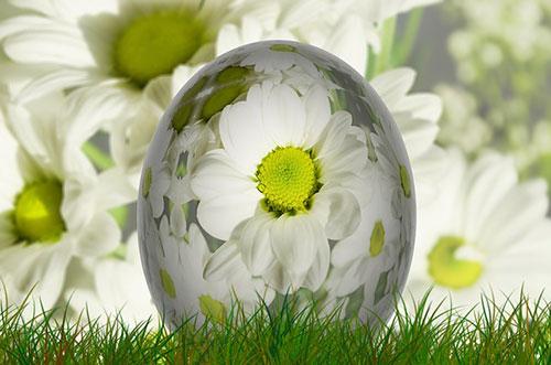 卵殻膜の可能性(イメージ)