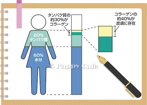 ヒトのコラーゲンの割合