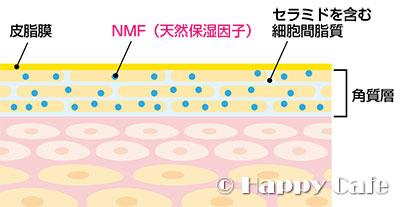天然保湿因子(NMF)