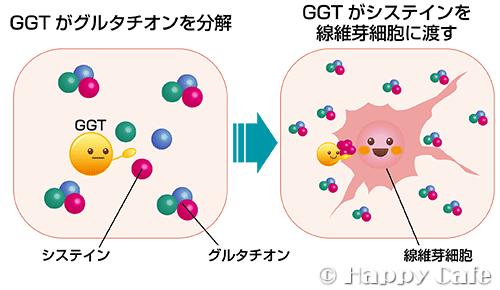 GGTとグルタチオン